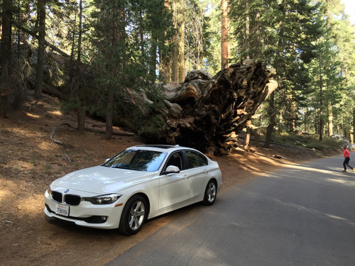 Sequoia01