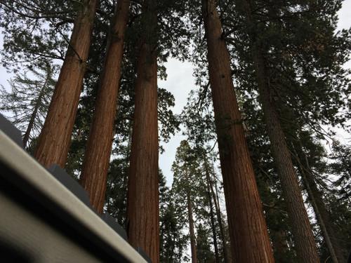Sequoia08